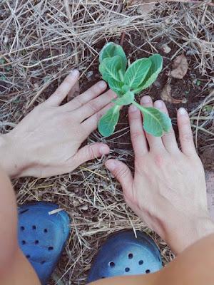Orticoltura naturale e metodi naturali: curare per curarci