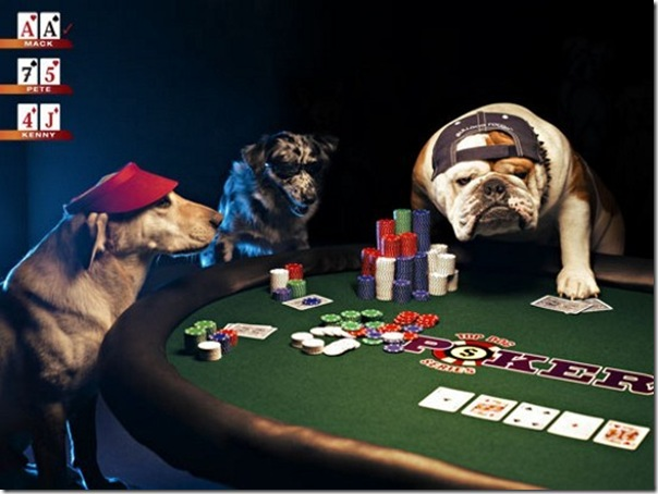 dog eat dog casino dogs playing poker