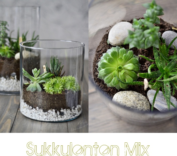 nachmachtipp sukkulenten terrarien sinnenrausch diy und interior blog. Black Bedroom Furniture Sets. Home Design Ideas