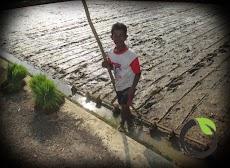 Petani adalah pahlawan pangan nasional