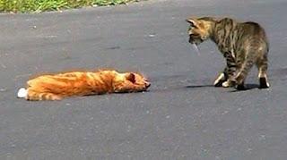 Kedi Ezmenin Öldürmenin Günahı Kefareti Nedir?