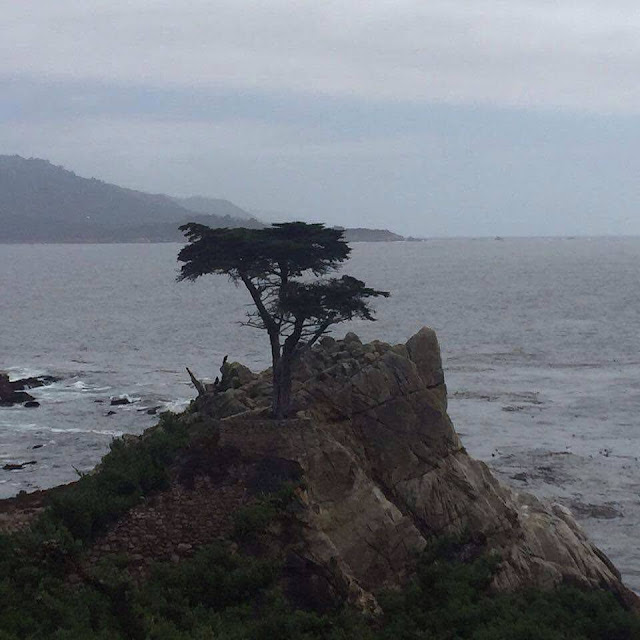 Lone Cypress at 17 Mile Drive