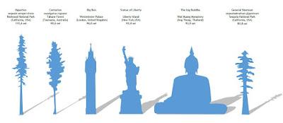 world tallest tree