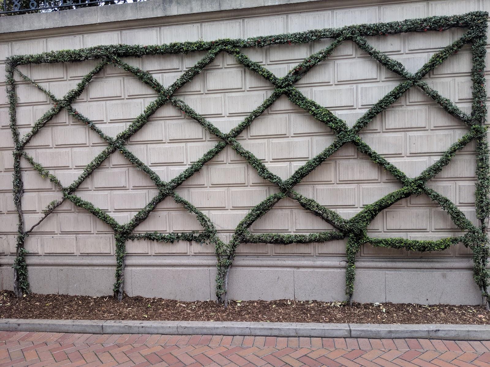 af03316b Belgian Fence Espalier Inspiration Via Disneyland