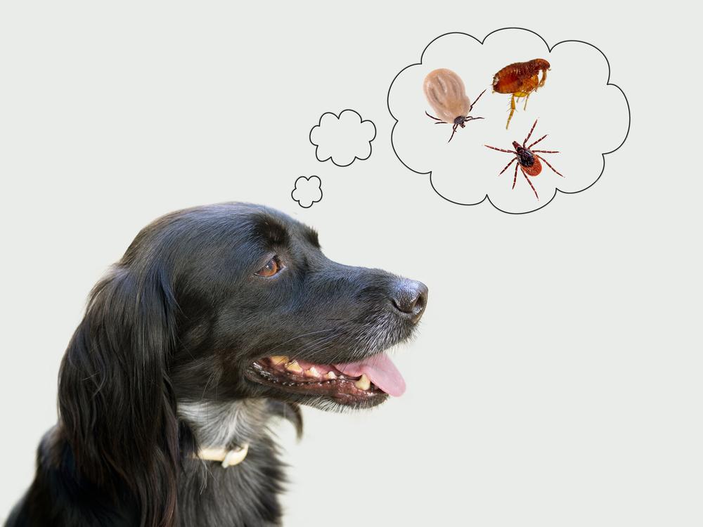 Dog Ears Warm Fever
