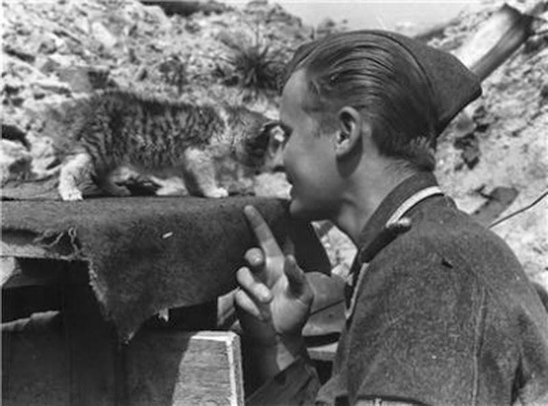 Estonian+SS+with+kitten+cat2