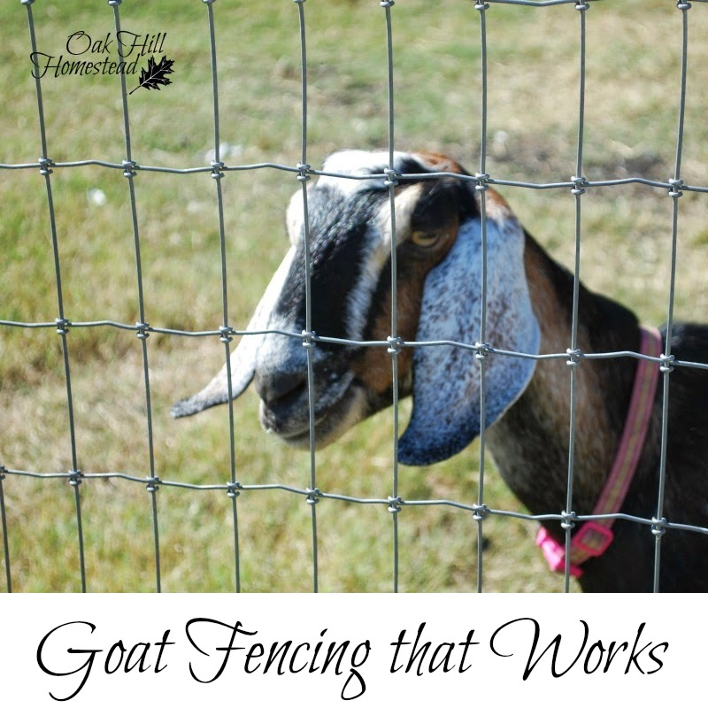 The Most Effective Fencing To Keep Goats In Their Pen