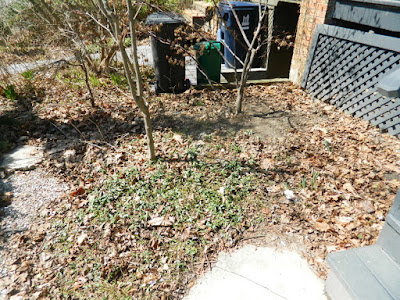 Toronto Parkdale front garden spring cleanup before by Paul Jung Gardening Services