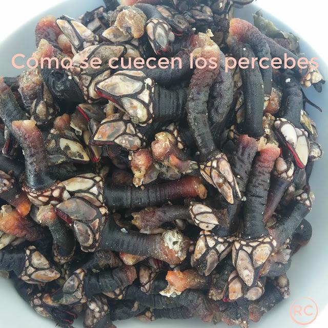 CÓMO-SE-CUECEN-LOS-PERCEBES-BY-RECURSOS-CULINARIOS