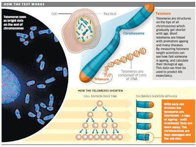 http://www.kateginting.com/2017/05/peranan-telomere-dalam-kurangkan-risiko-penuaan-dan-penyakit-kronik.html