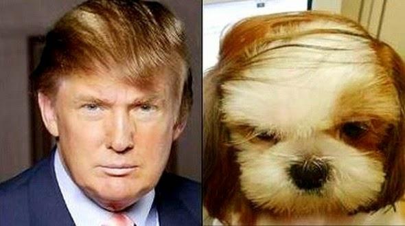 Σκύλος διάσημοι