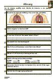 Atmung-Brustatmung-Bauchatmung-Zwerchfell-Organe