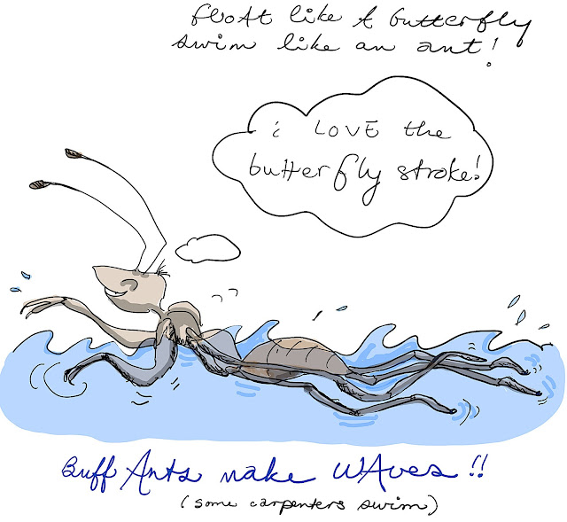 Buff ants make waves!