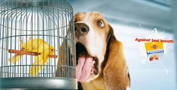 Comida  contra el mal aliento de tu perro.