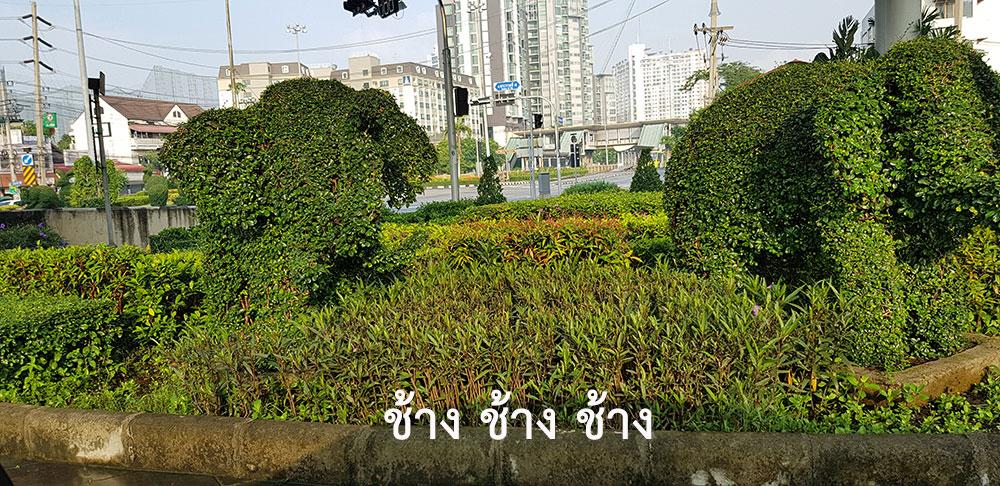 ต้นไม้ตัดแต่งกิ่งเป็นช้าง