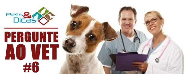 Como ensinar o cachorro a fazer as necessidades no lugar certo