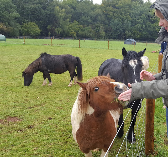 Feeding rescued ponies at Dean Farm Sanctuary