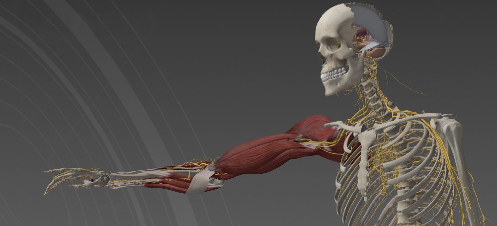 Anatomy Textbooks Are Officially Obsolete With Rise of New Interactive Tools