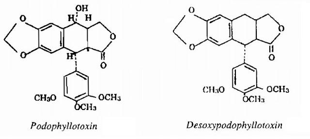 Thành phần hóa học Bát Giác Liên - Podophyllum tonkinense - Nguyên liệu làm thuốc Đắp vết thương Rắn Rết cắn