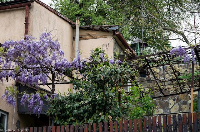 сади на вул. Ольбрахта