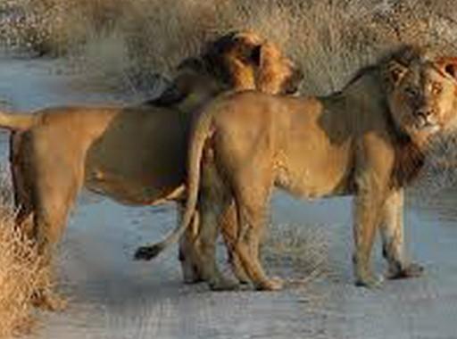 Taman Safari Terbaik Afrika