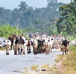 Police confirms the arrival of fulani herdsmen with cows, not arms in  Delta State