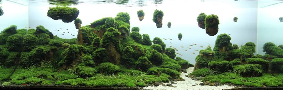 bể thủy sinh chơi rêu dùng đá gỗ hóa thạch