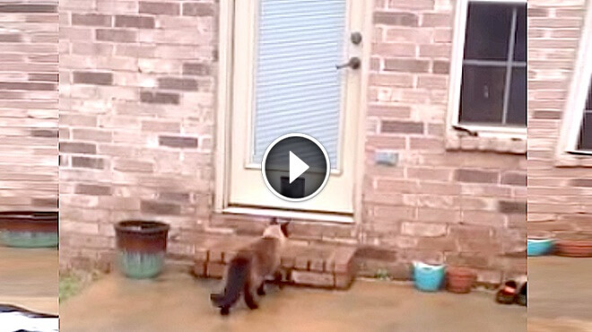 Father Spent 2 Hours Building A Kitty Door, But His Cats Reaction? Hilarious!