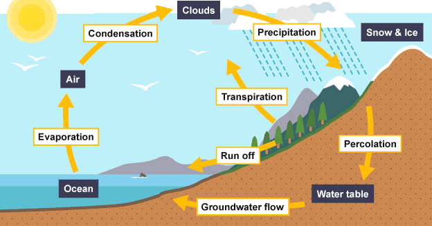 You Learn Something New Every Day: The Water Cycle