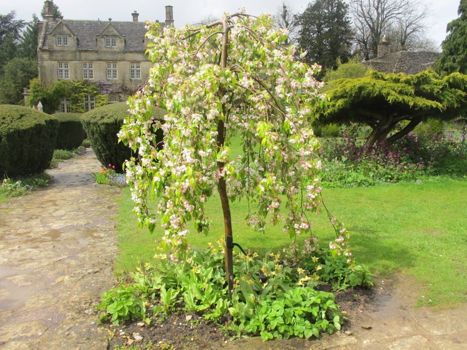 Crab Apples, Barnsley House, via Facebook page, as seen on linenandlavender.net, http://www.linenandlavender.net/2013/05/the-english-garden.html