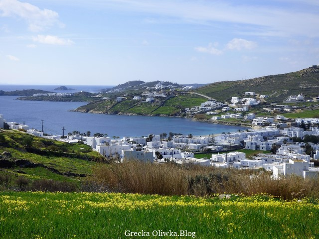 białe greckie domki na tle zieleni, żółtej koniczyny i Morza Egejskigo