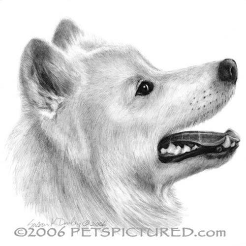 14-Samoyed-Susan-Donley-Cats-and-Dogs-Featured-in-Pencil-Portraits-www-designstack-co