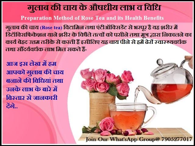 गुलाब की चाय के औषधीय लाभ व विधि