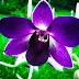 O cultivo de orquídeas