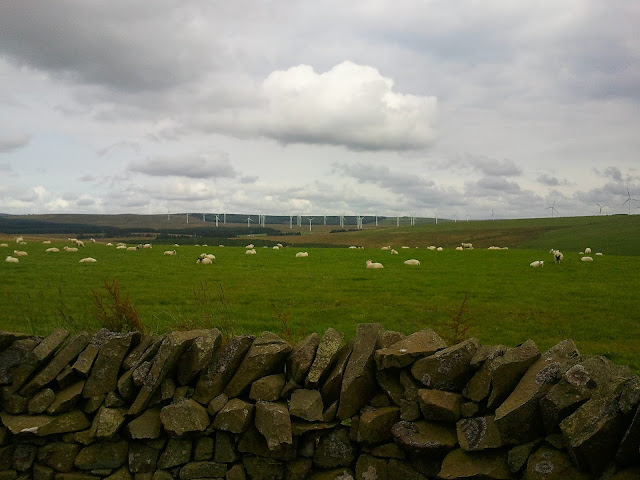 Hills with sheep and wind turbines