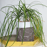 http://www.ohohblog.com/2015/02/make-planter-with-plastic-bottle.html