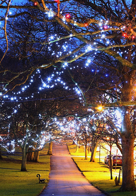 Christmas lights on The Stray, Harrogate.