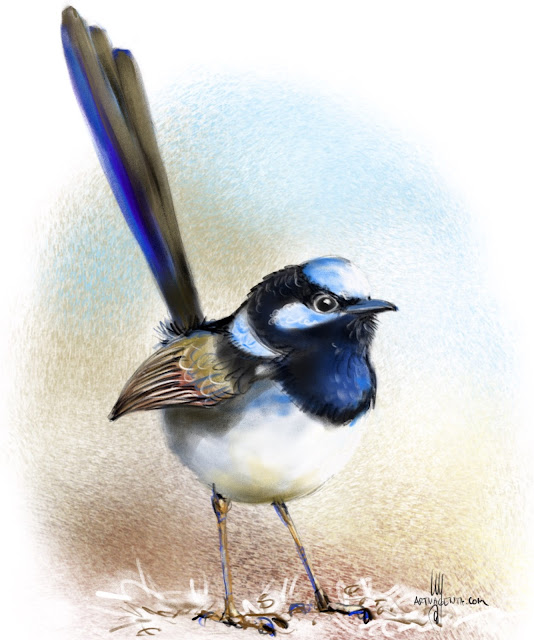Superb Fairywren bird painting by Artmagenta