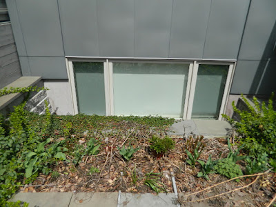 Toronto Summerhill spring backyard garden clean up before by Paul Jung Gardening Services