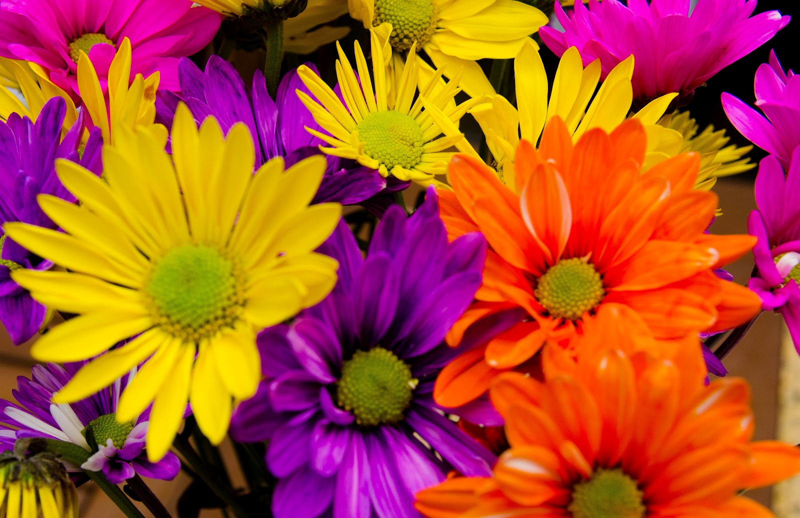 Semi Professional Kitchen Faucet Colored Daisies 28 Images Multi Colored Stock Photo