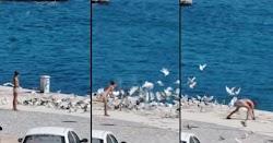 Με πρωτοφανή αγριότητα ένας ανήλικος παράνομος μετανάστης πετάει πέτρα και σκοτώνει περιστέρι στο λιμάνι Βαθύ της Σάμου, για να το φάει προφ...