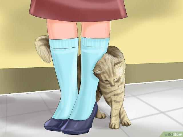 Ngôn Ngữ Của Loài Mèo