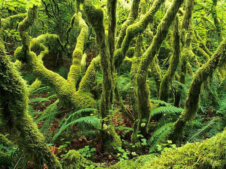 amazon rainforest south america - photo #18