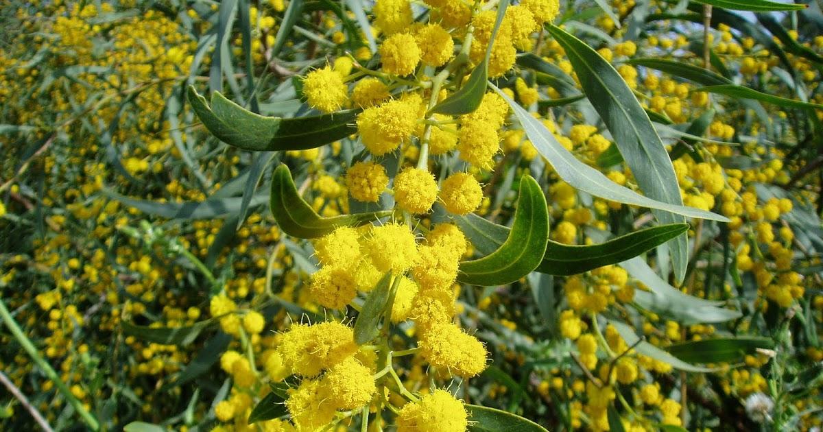 Gu a de rboles ornamentales plantas riomoros for Especies ornamentales