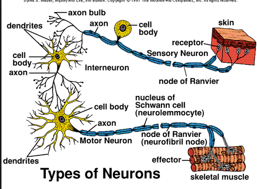 Kennedy Clan Science: Three Types of Neurons