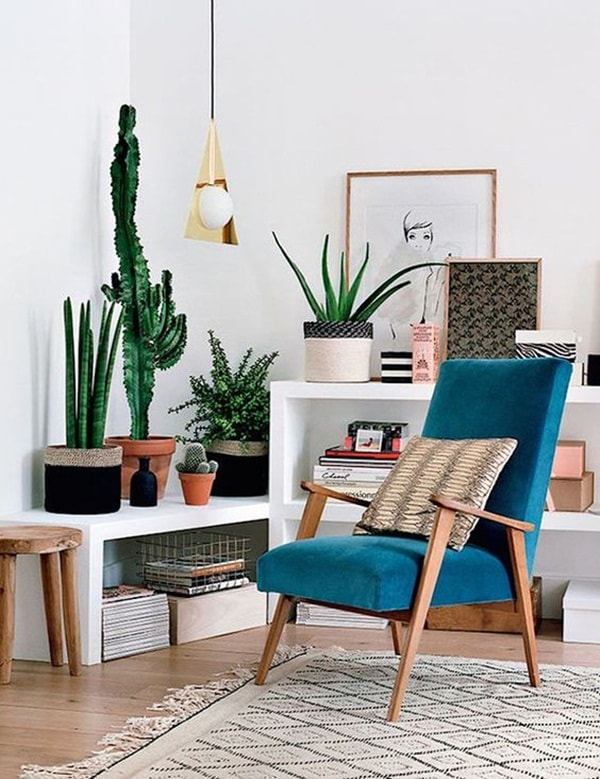 The Best Plants To Decorate Interiors 5