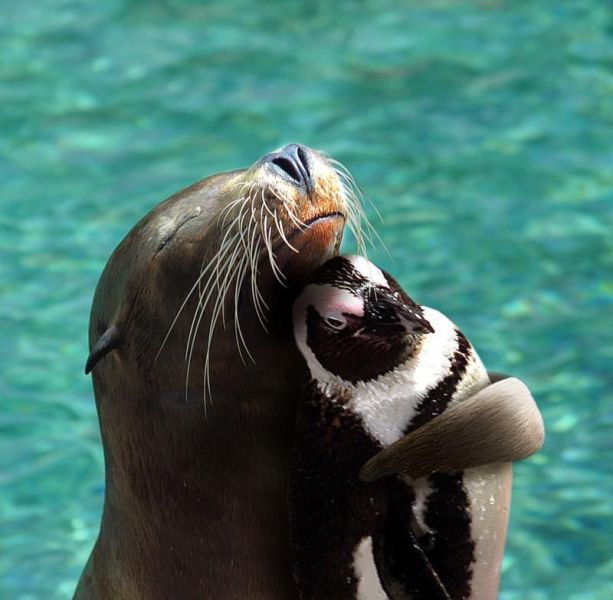 The happiest animals in the world (15 pics) | Amazing ...
