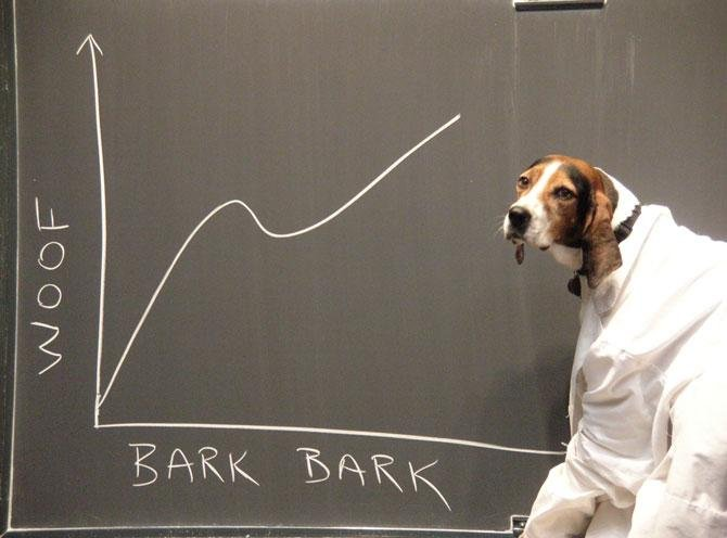 dog-science-bark-to-woof.jpg