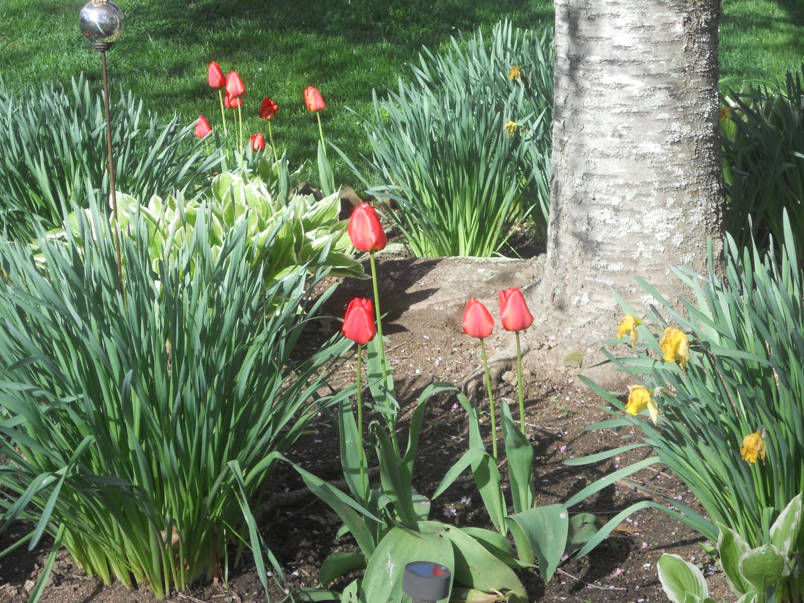A Gardening To Do List For May Justonedonna
