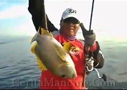 Mancing Casting Dapat Ikan Perch Maori Fish